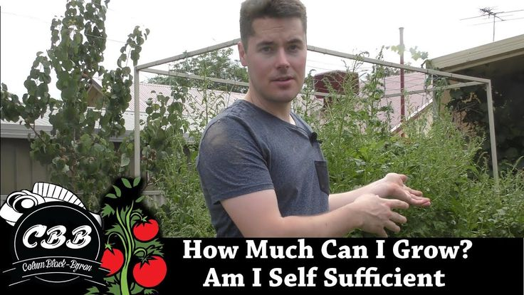 How Much Can I Grow in my Backyard? Am I Self Sufficient? #Homestead #prepper #survivalist #offgrid #lifestyle #health #style