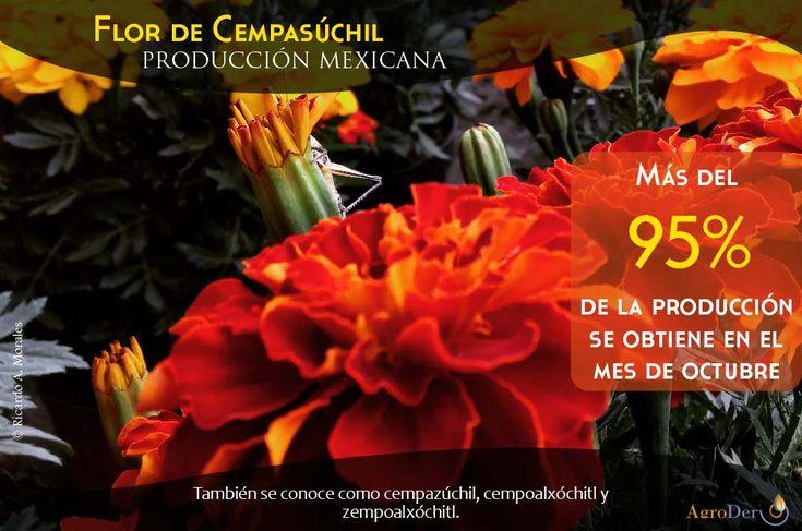 #FlorDeCempasúchil #ProducciónMexicana