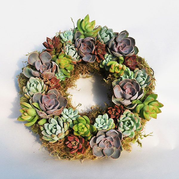 A variety of noticeably textured purple, gray, green, silver, and burgundy-colored succulents adorn this luscious floral door décor that also makes an excellent gift or a unique centerpiece for your table. Naturally slow growers, these lively succulents only need to be watered every 3–10 weeks and can be pinched or pruned in order to maintain the shape you've grown to love.