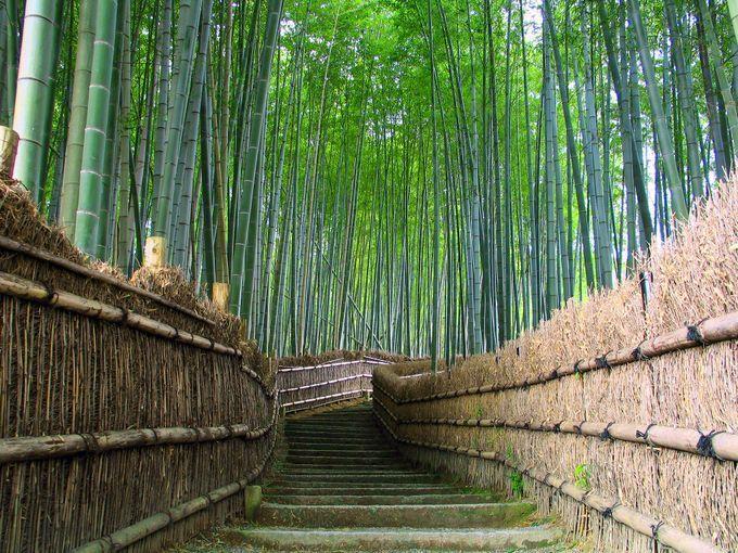 #関東 #伊豆 伊豆と言えば国内有数の温泉地として有名ですが、もちろん温泉だけじゃないんです!多くの史跡・景勝地を有する観光王国でも知られていますし、伊豆半島の中央部には日本百名山のひとつである天城山脈が連なっています。また沿岸部では新鮮な海の幸が豊富で知る人ぞ知るバラエティ溢れる美食の半島でもあります!