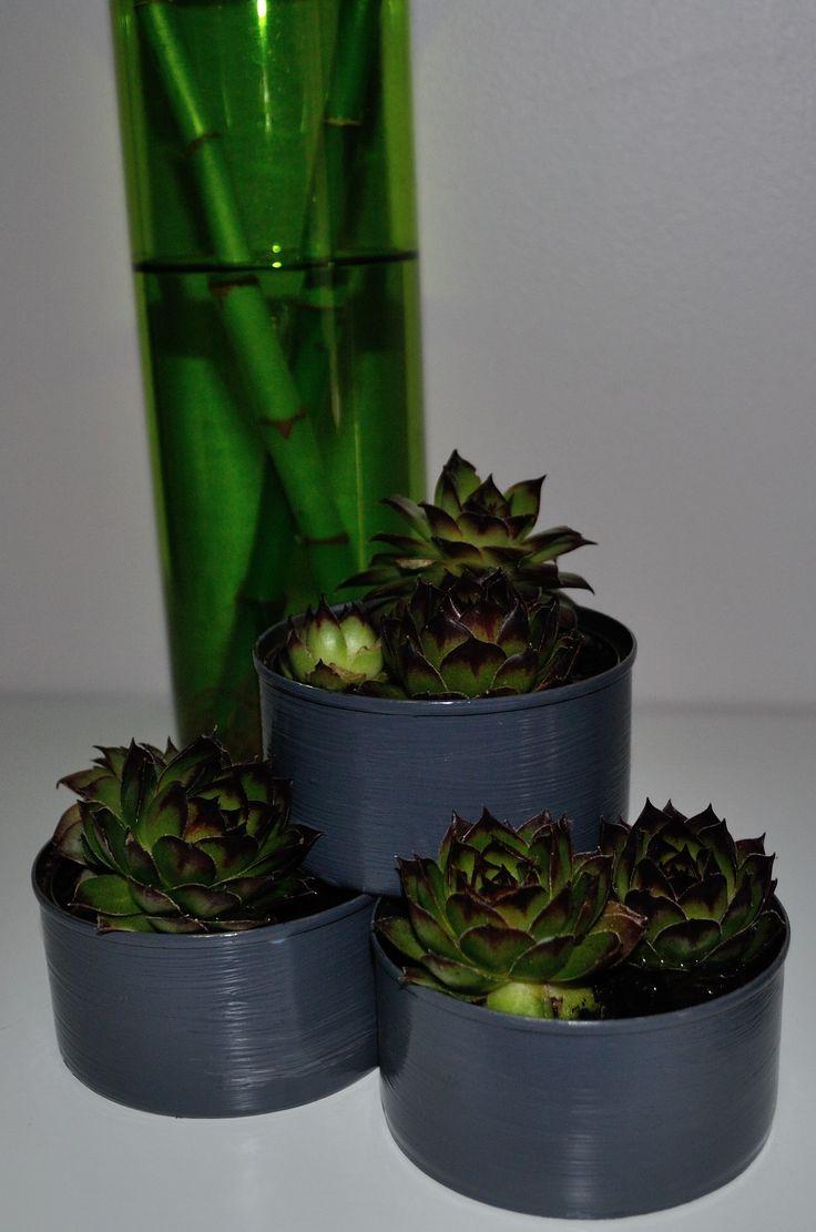 3 petites boites de conserves, un peu de peinture et quelques plantes vivaces et le tour est joué !!