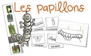 Sciences/Elevage : les papillons | Bout de gomme | Bloglovin'