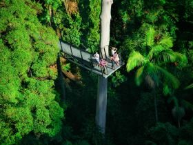 Tamborine Rainforest Skywalk: Tamborine Rainforest Skywalk Explores the Rainforest Canopies. Your adventure begins in the Rainforest Eco Gallery which has a comprehensive array of rainforest fauna and flora information and displays. These include interpretive panels with...