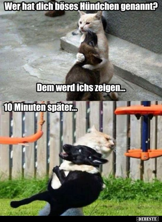 ¿Quién te llamó perrito malo?   – Lustige katzen