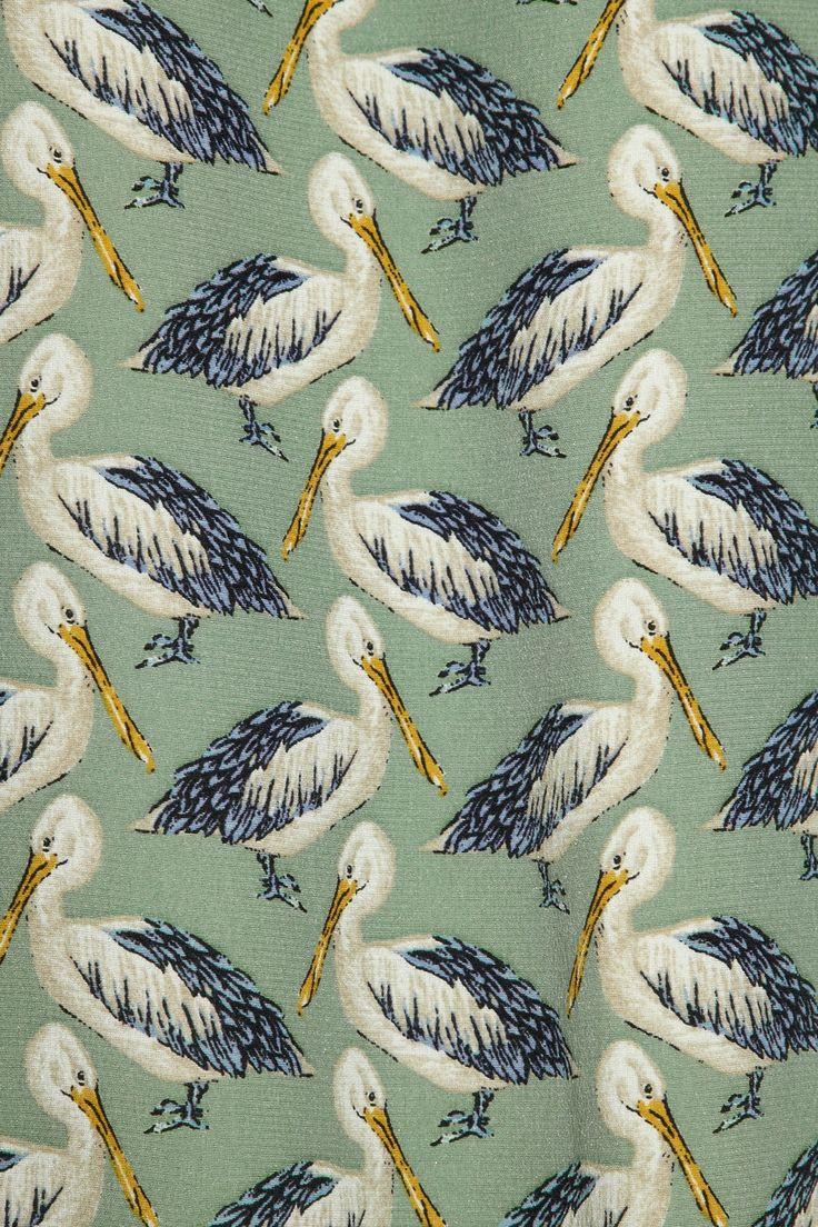 Mar pelicano animal ave