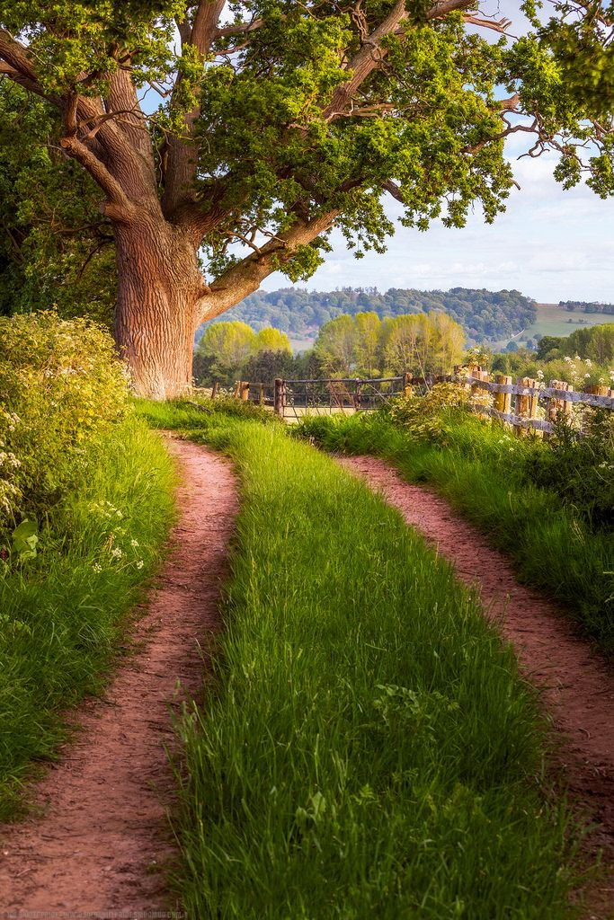 Country Lane, Leton, Hereford, Herefordshire, England by Joe Daniel Price