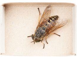 Homemade Horsefly Repellent