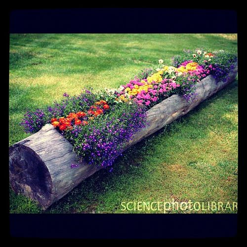 Nature's Flower Box.... because we have 8 telephone poles sitting in our back acreGardens Ideas, Trees Trunks, Flower Planters, Tree Trunks, Flower Gardens, Cool Ideas, Flower Beds, Logs Planters, Yards