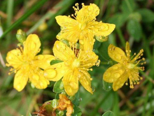 14 Herbal Remedies For Menopause Symptoms - Boldsky