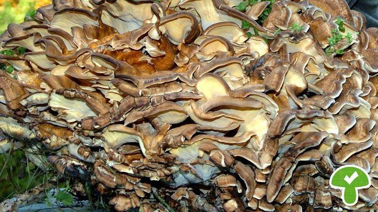 Essbare Pilze Bayern