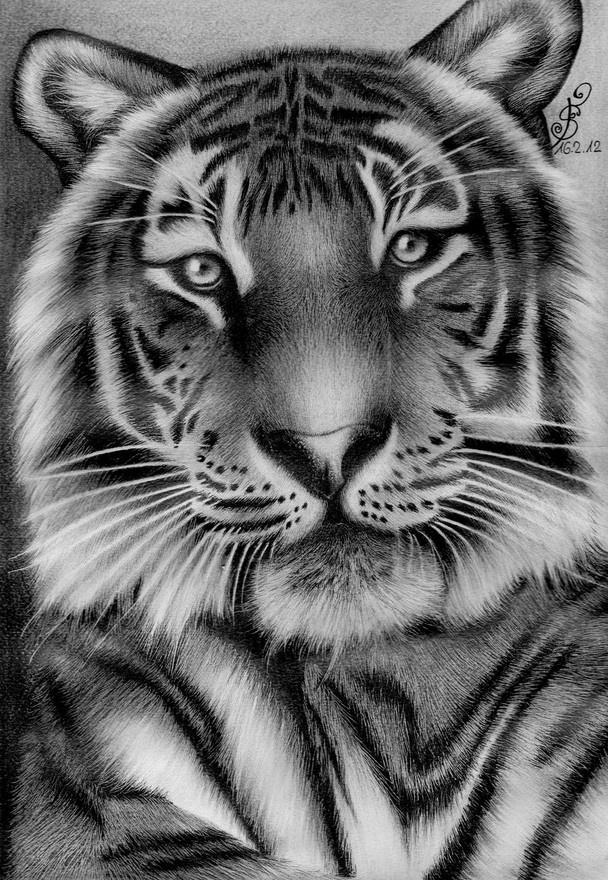 lady  by Tigerinmyveins in Tiger drawings