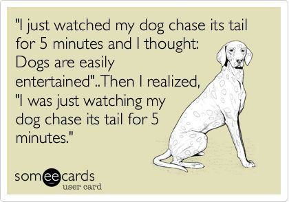 """""""I just watched my dog chase its tail for 5 minutes and I thought: Dogs are easily entertained""""..Then I realized, """"I was just watching my dog chase its tail for 5 minutes."""""""