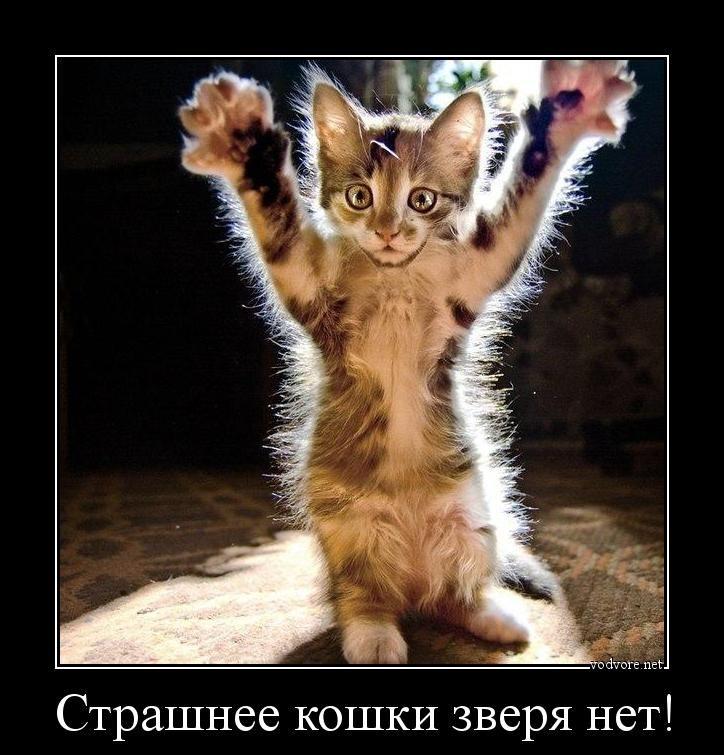 Страшнее кошки зверя нет!!! Сила духа - это всё!!!
