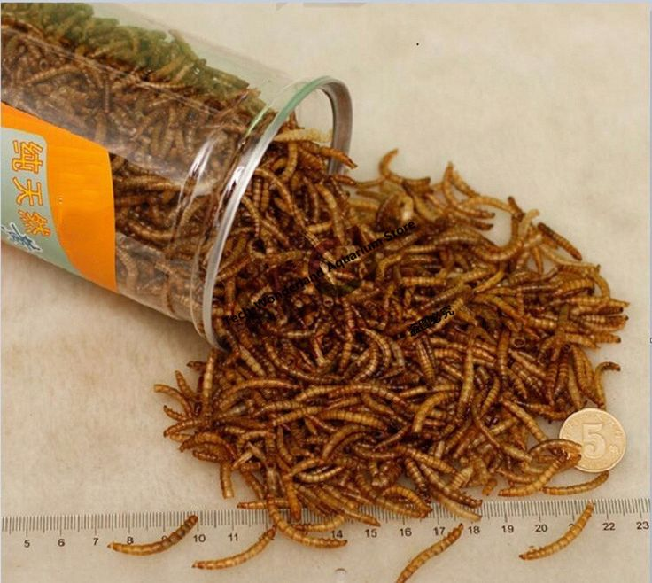 660ML Mealworm Dried Aquarium Tank Pond Fish Reptile Wild Bird Food Hamster Birdseed Lizard Turtle Arowana Tenebrio Chicken Feed