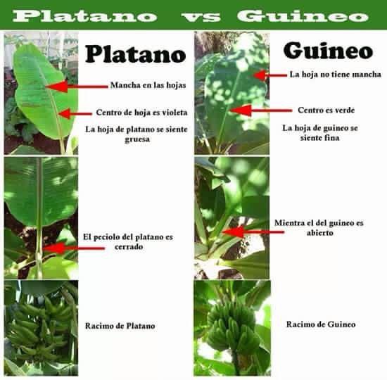 293 best hidroponico & acuaponia huerto casero & siembra en