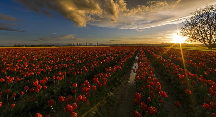 Sunset In The Skagit Valley Photograph by Mike Reid