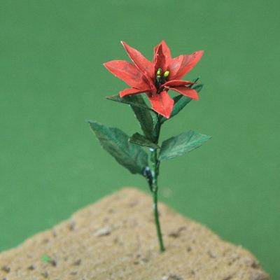 Tutorial - Poinsettias for Chistmas scenes