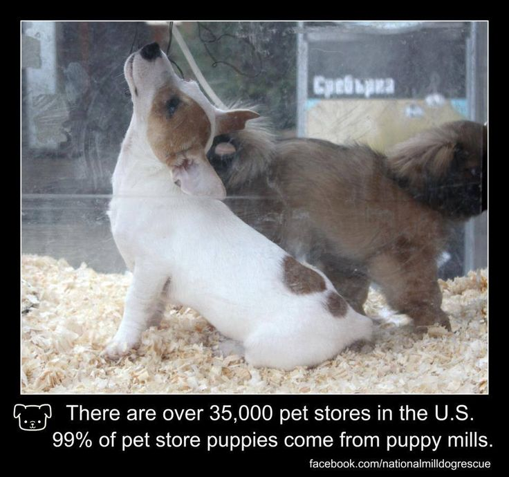 pet stores that sell puppies 1000 images about puppymills and there poor dogs on 4873
