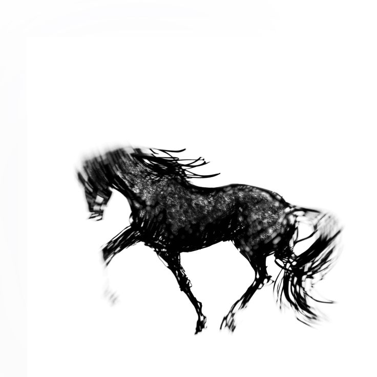 The black horse. Just having some fun with my Wacon Intuos. #digital drawing