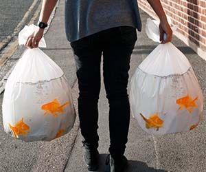 Goldfish Garbage Bags $16.00