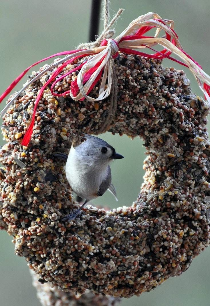 Here's an easy project that actually works... For the market this Christmas, I put together these cute birdseed wreaths (that were a hit)...