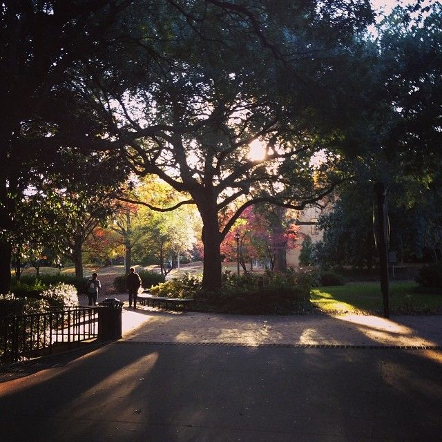 #UofSC. Photo by stephanielynorr: http://instagram.com/p/g3t_Geh9jM/: Carolinagamma Phi, Photo