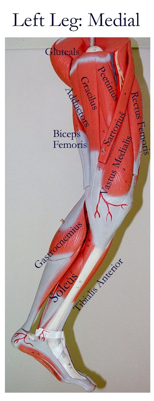 Related Pictures anterior and posterior views of the human body ...