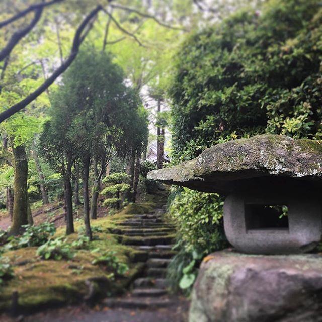 #senganen #shimadzu #japan