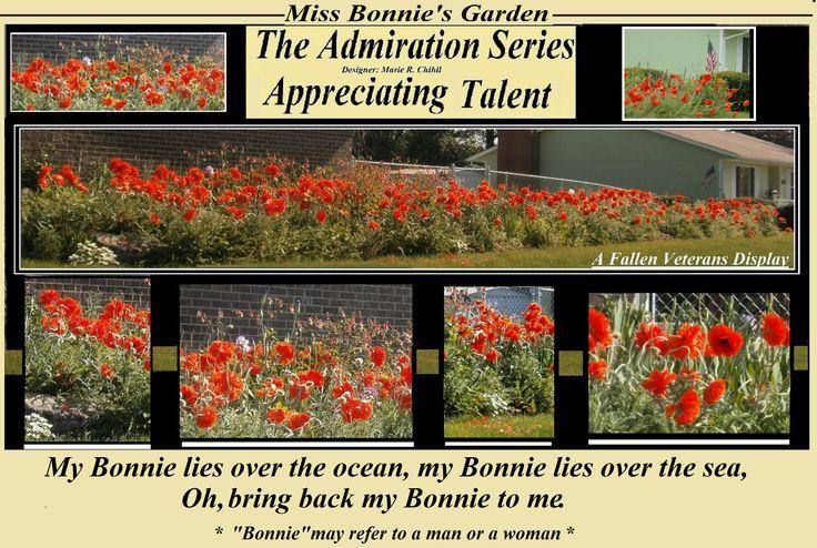 Poppies in Miss Bonnies Garden