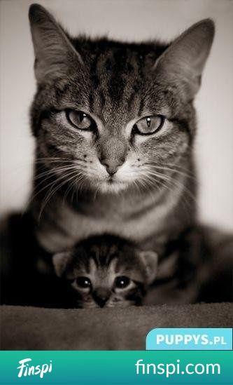 oojj ;3 #zwierzęta #kot #kotek #koty #pupile