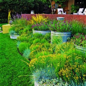 Yellow santolina flowers accent a soothing planting of blue fescue, silvery lamb's ears, and 'Otto Quast' Spanish lavender in steel livestock tanks.