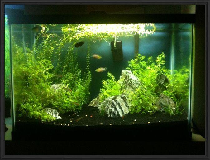 Best 25 20 gallon aquarium ideas on pinterest fish tank for 20 gallon fish tank petsmart