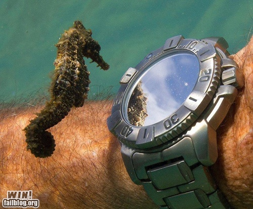 Checking the Time WIN: Photos, Mirror Mirror, Diver Watches, Telling Time, Seahorses, Epic Win, Sea Hors, Photography, Animal