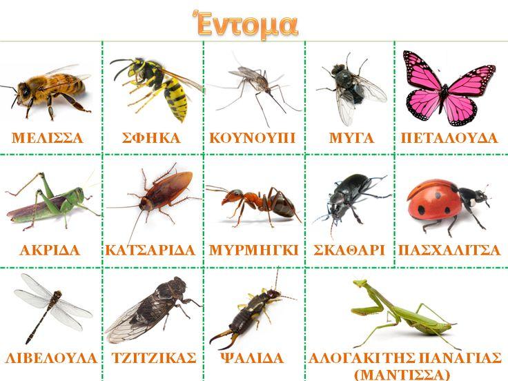 """Νηπιαγωγός για πάντα....: Εισαγωγή στη Θεματική Ενότητα """"έντομα"""": Πίνακας Αναφοράς & Έρευνα Πεδίου"""