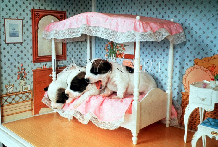 Three dogs waking up in the doll house, John Drysdale Prints from Easyart.com