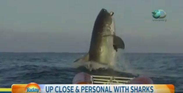 Shark Video Freaks Out Australian News Anchor