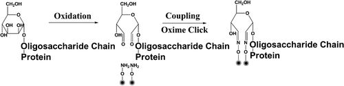 Highly Selective and Ultra Fast #Solid-Phase Extraction of #N-Glycoproteome by #Oxime Click Chemistry Using #Aminooxy-Functionalized Magnetic #Nanoparticles