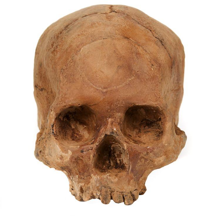 Bone Chocolate Skull on AHAlife