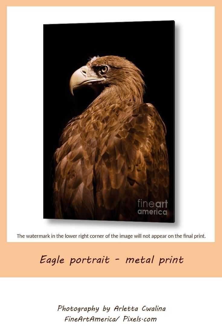Powerful animal on black background, Aquila Chrysaetos Golden Eagle Head Portrait Metal Print. Photography by Arletta Cwalina. See more clothes and home decor ideas and if you love it, feel free to share, maybe your friends would like to have it too :) #homedecor #eagle #wallprint