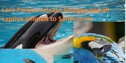 Loro Parque: Release Morgan and all your captive animals to SanctuariesCare2 : The Petition Site : My PetitionSite