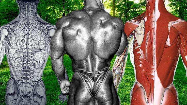 Sırt Kasları Anatomi Dersi 3D Tutorial [SESLİ] Çalışma Programını Kendi...