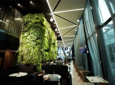 Greenroofs.com Project of the Week: 8/6/12, Auckland International Airport Novotel Hotel Green Wall, Auckland, New Zealand, 646 sf. Greenwall; Photos Courtesy of Natural Habitats
