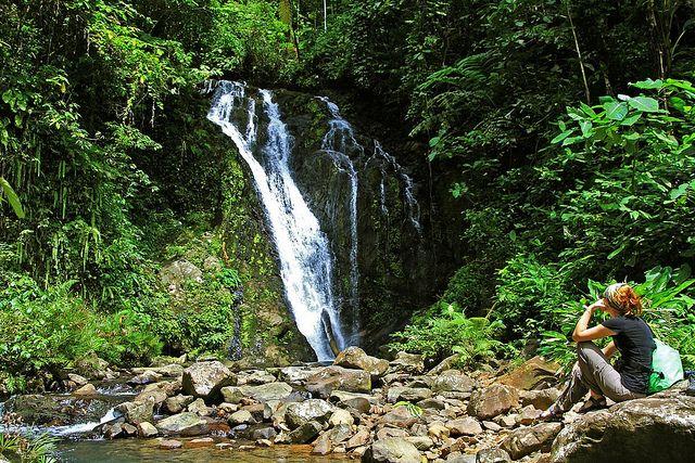 rainforest hike at Tawau Hill Park, Borneo  #hapakuna