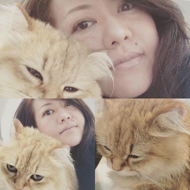 ラボとラブ♡ なかなかツーショット撮れなかったけど、メイクの邪魔してくれてる合間にGETーー♡ #チンチラゴールデン#ペルシャ猫 #ふわもこ部#もふもふ#ふさふさ #ねこ#猫#にゃんこ#愛猫#美猫#仔猫 #ゴルフ#ゴルフ女子 #メイク#メイクアップ #ツーショット#ラブラブ写真 #catstagram#cat#cute#princess#pretty#nyaspaper#golfstagram