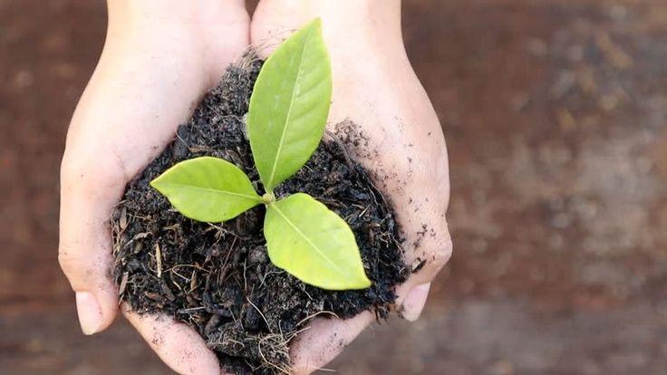 Siemens Türkiye'den Karbon Nötr Hedefi için 5 Bin Ağaçlık Orman Sürdürülebilirlik kapsamındaki bu hedefi gerçekleştirmek için özel bir proje grubu kuran Siemens Türkiye, karbon ayak... http://www.enerjicihaber.com/news.php?id=2582