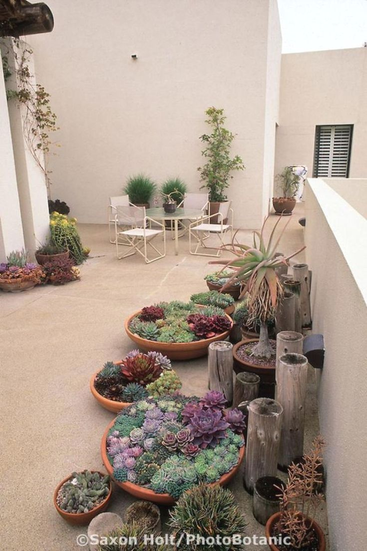 Desert Garden Landscaping Can Be Very Original Regardless Of The Limitations And With Some Creativity You Can Have An Incred Plants Indoor Plants Desert Garden