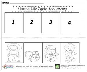 human life cycle sequencing worksheet   Worksheet for kids   Life ...