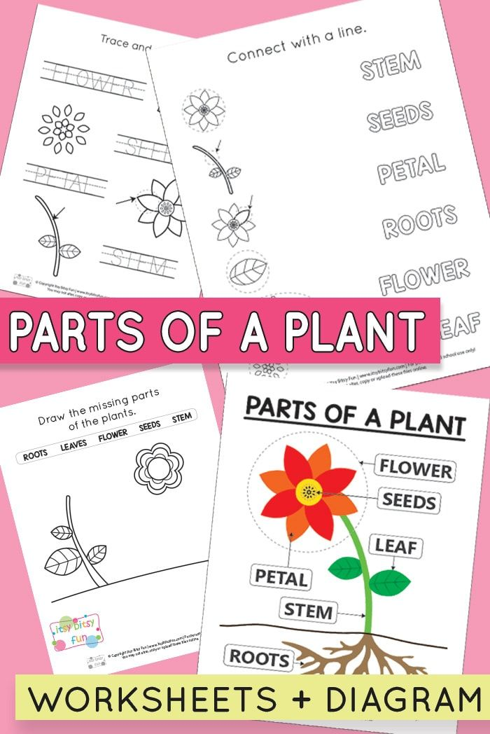 free printable parts of a plant worksheets teach this parts of a plant preschool garden. Black Bedroom Furniture Sets. Home Design Ideas