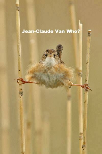 Jean-Claude Van who? (Find the Volvo/Mack truck commercial with Van-Dam to see the humor in this)