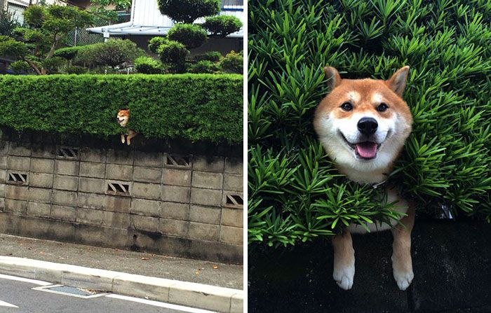 Esses+cachorros+fizeram+o+impossível+para+dar+uma+olhadinha+na+rua